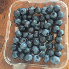 """""""Don't Eat MY Blueberries!"""""""